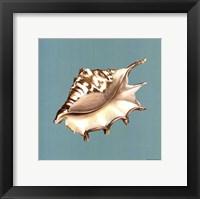 Shell on Aqua IV Framed Print