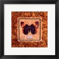 Framed Diva Moth