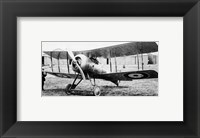 Framed Gloster Nightjar