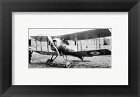 Framed Gloster Nightjar