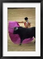 Framed matador and a bull at a Bullfight, Spain