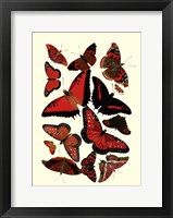 Framed Red Butterfly Study