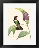 Framed Delicate Hummingbird IV