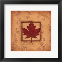 Maple Leaf Framed Print