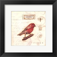 Framed Color Bird I