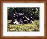 Framed Beautiful Cow
