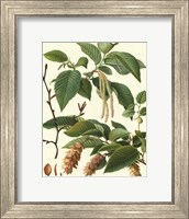 Framed Pincecones & Foliage I