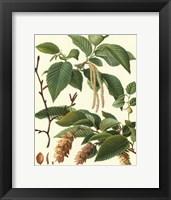 Framed Pincecones & Foliage I