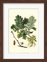 Framed Acorns & Foliage II