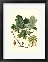 Framed Acorns & Foliage II