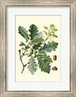 Framed Acorns & Foliage I