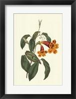 Framed Vibrant Blooms I