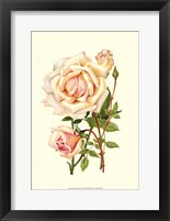 Framed Victorian Rose III