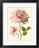 Framed Victorian Rose I