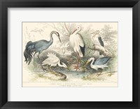 Framed Herons, Egrets and Cranes