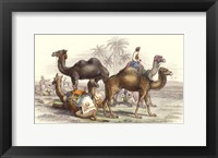 Framed Arabian Camels