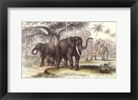 Asiatic Elephants Framed Print