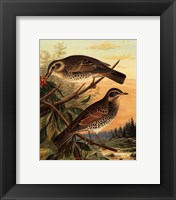 Small Woodland Birds II Framed Print