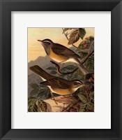 Small Woodland Birds III Framed Print