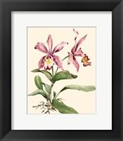 Framed Pink Cattleya Orchid