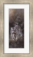 Framed White Tigers