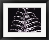 Framed Fern III
