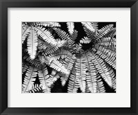 Framed Fern IV