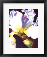 Framed Blue Iris I