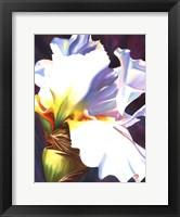 Framed Blue Iris II