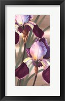 Framed Asian Iris II