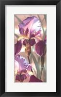 Framed Asian Iris I
