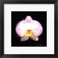 Framed Vibrant Flower IV