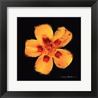 Framed Vibrant Flower X