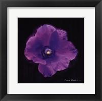 Framed Vibrant Flower VIII