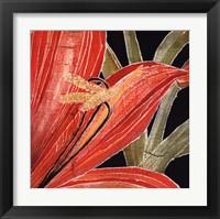Framed Red Amaryllis With Stem