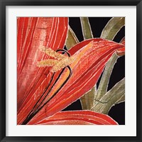 Framed Red Amaryllis With Stem