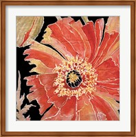 Framed Oreintal Poppy
