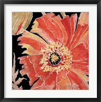 Framed Oreintal Poppy