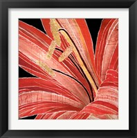 Framed Red Amaryllis