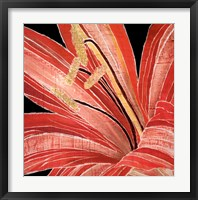 Framed Red Amaryllis