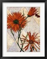 Orange Daises Framed Print
