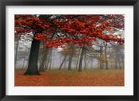 Autumn Mist I Framed Print