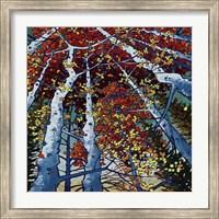 Framed Seasons
