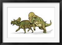 Avaceratops Framed Print