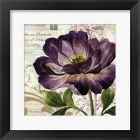 Framed Study in Purple II -mini