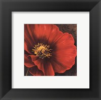 Rouge Poppies I -petite Framed Print