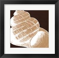 Natural Shell III - mini Framed Print