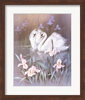 Framed Swans With Waterlilies