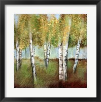 Framed BIRCH WOODS I