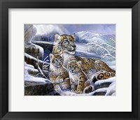 Framed Snow Leopards
